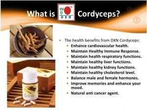 Cordyceps DXN El Viagra Del Himalaya (4)