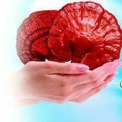 DXN International Siempre Promoviendo El Ganoderma Lucidum (5)