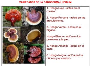 Ganoderma DXN, Múltiples Variedades Las Mismas Propiedades (1)