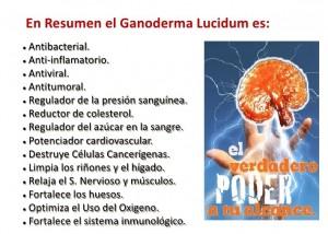 Lingzhi Coffee 3en1 y Las Bondades Del Ganoderma Lucidum (4)