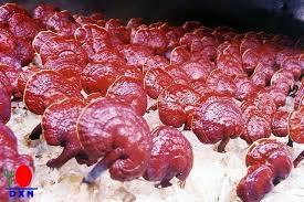 Cocozhi a base de Ganoderma orgánico