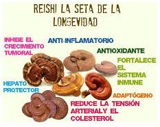 Beneficios De Ganoderma Lucidum