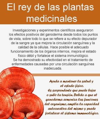 Beneficios del ganoderma para nuestra salud