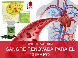 Spirulina DXN renueva la sangre