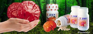 ganoderma-dxn-presentaciones