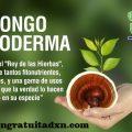 Disminuir Peso con Alimentos Orgánicos DXN.