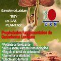 Cual producto de Ganoderma es para la diabetes