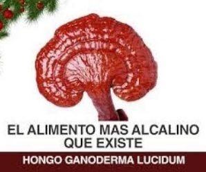 DXN Hierba Lingzhi Ganoderma