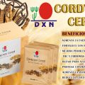 BENEFICIOS DEL HONGO CORDYCEPS
