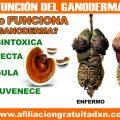 LA VERDADERA FUNCIÓN DEL GANODERMA